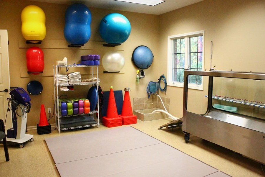 rehab room in clinic. depicted are various rehab tools including exercise balls leashes, and cones. Also has a place for owners to sit in room and water tank used in rehab
