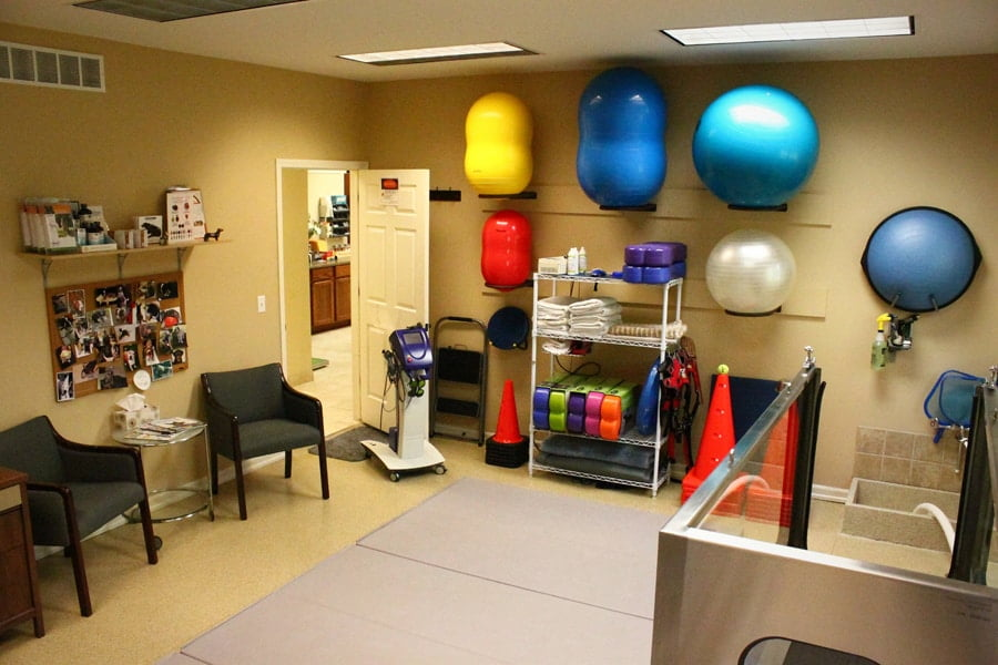 rehab room in clinic. depicted are various rehab tools including exercise balls leashes, and cones. Also has a place for owners to sit in room and water tank